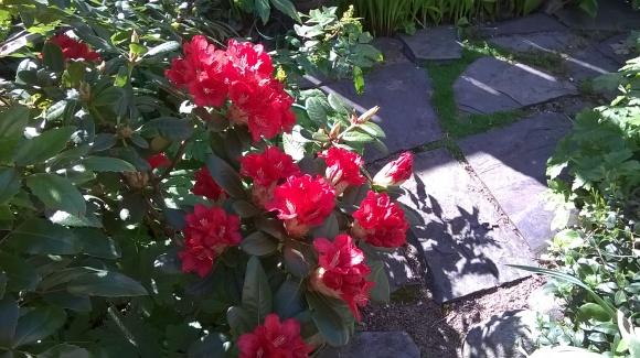 kukat ja valo 2