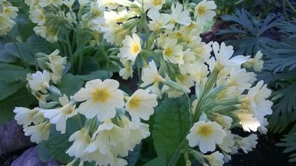 kukat ja valo