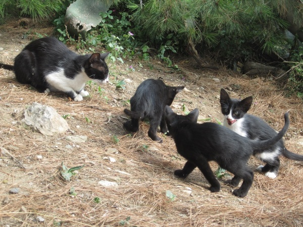 kissaemo pentuineen 5