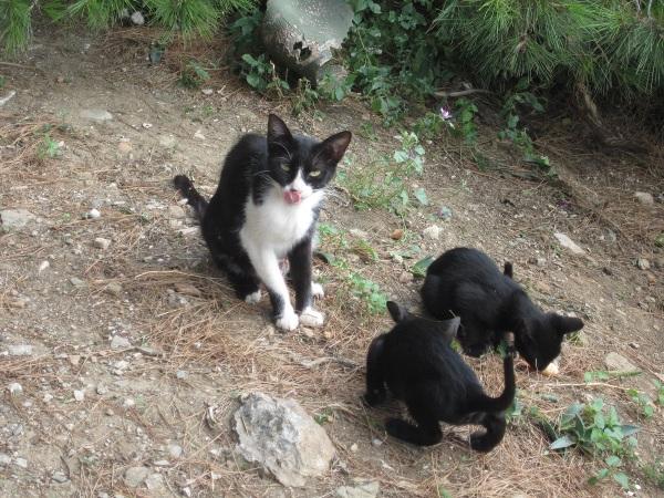 kissaemo pentuineen