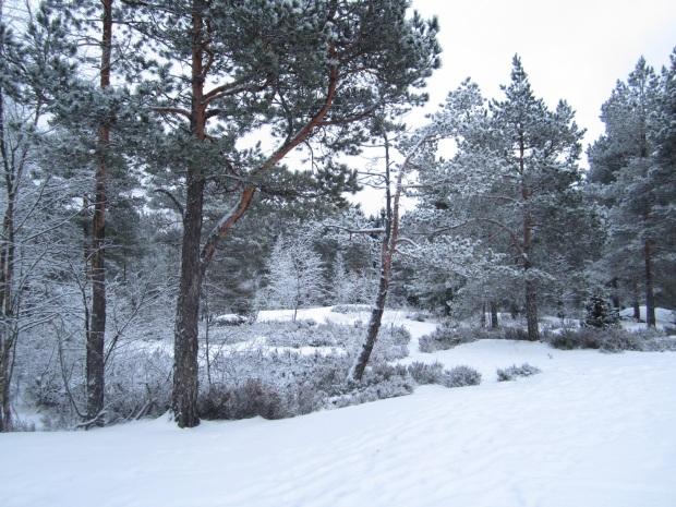 talvi 2