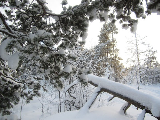 talvi 4