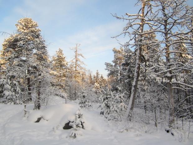 talvi 5