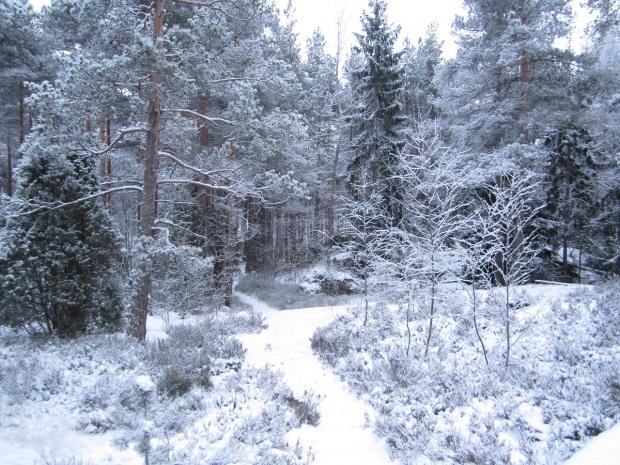 talvinen polku