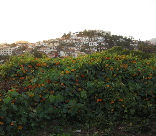Funchal 3