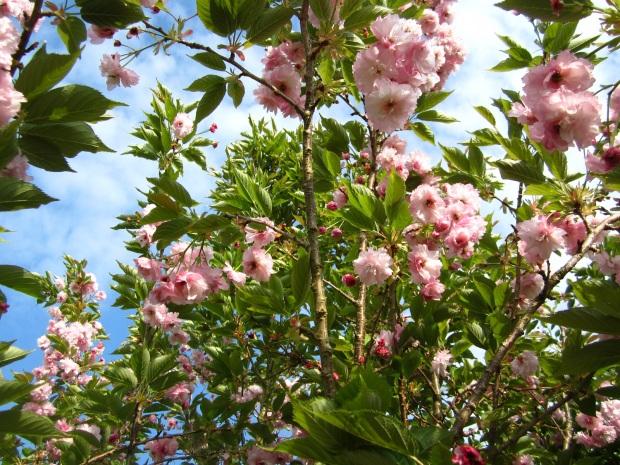 kukkapuu cork