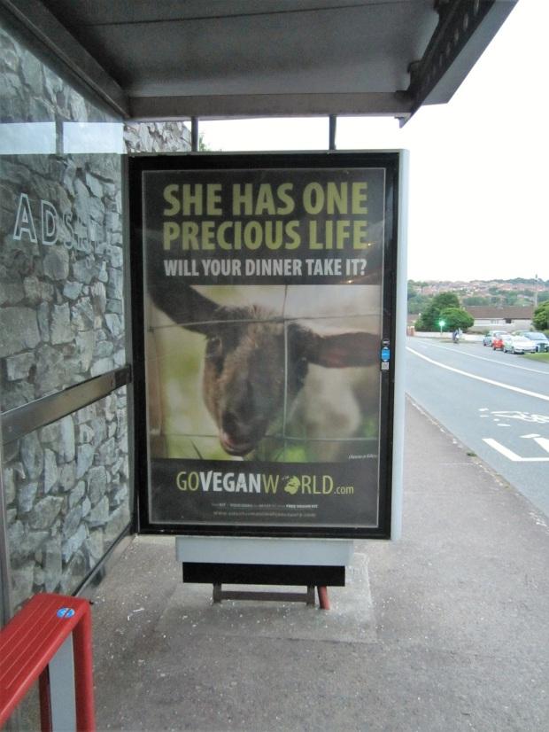 vegaaninen irlanti