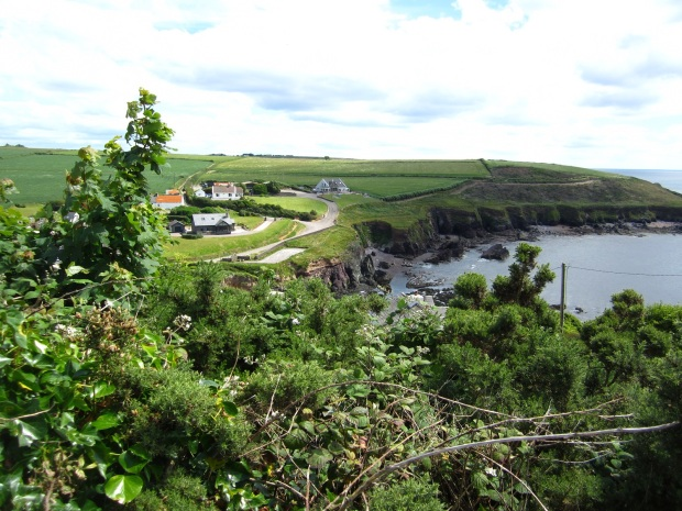 ballycotton cliff walk 10