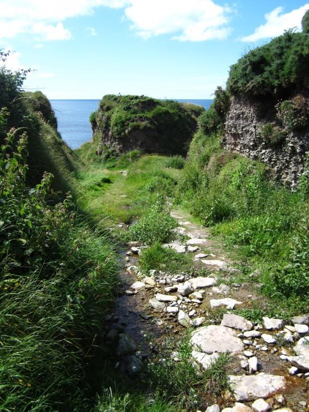 ballycotton cliff walk 6