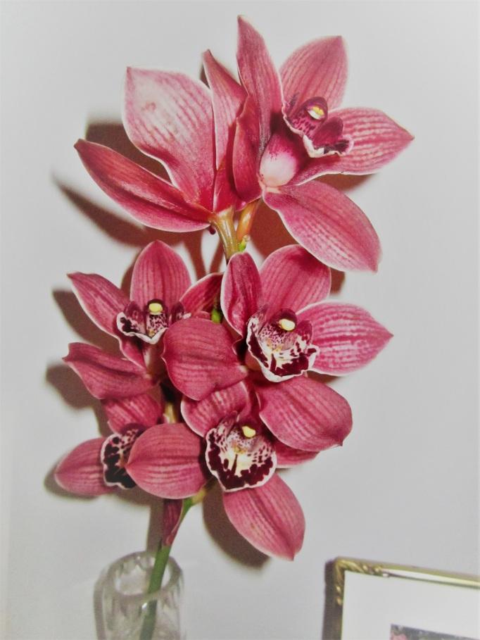 orkidea-aidille